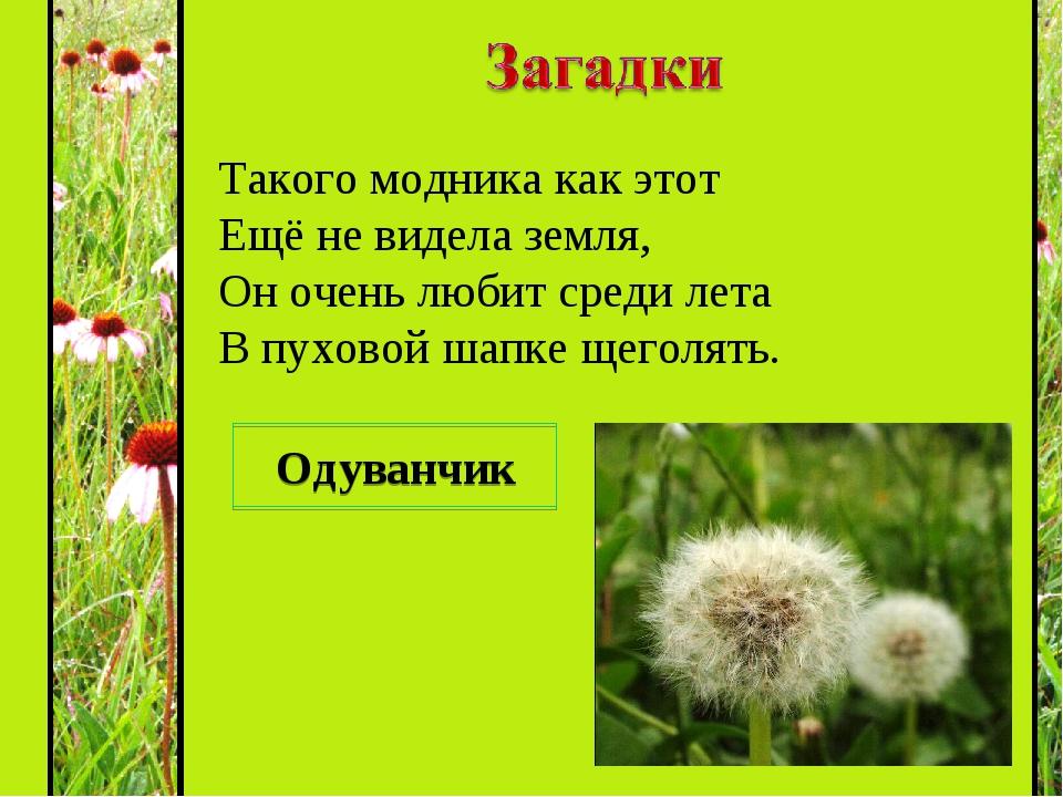 Загадки в картинках про растения