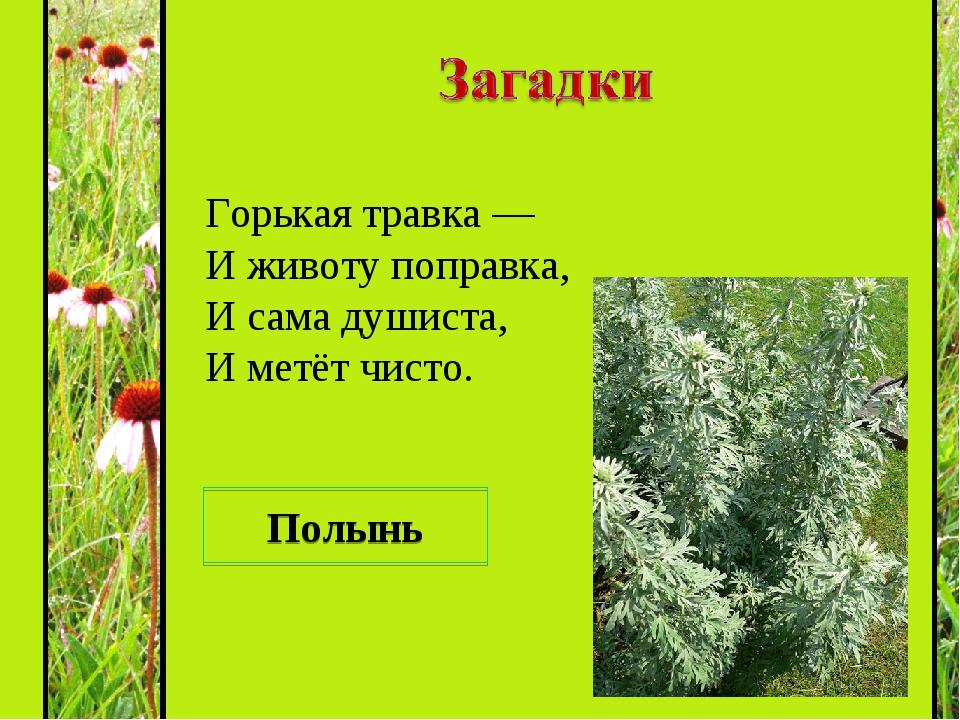 загадки про охрану растений с картинками