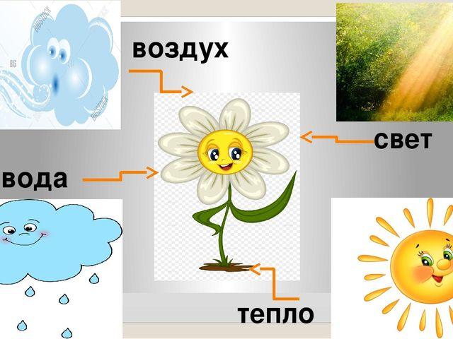 картинки воздух для растений остальное