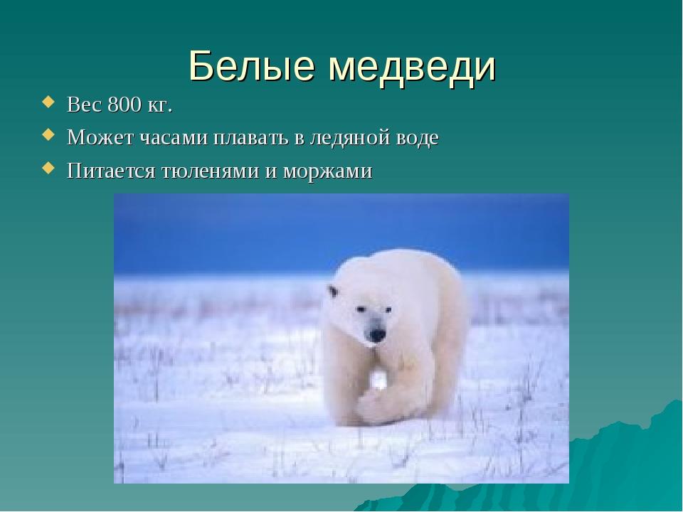 Белые медведи Вес 800 кг. Может часами плавать в ледяной воде Питается тюленя...