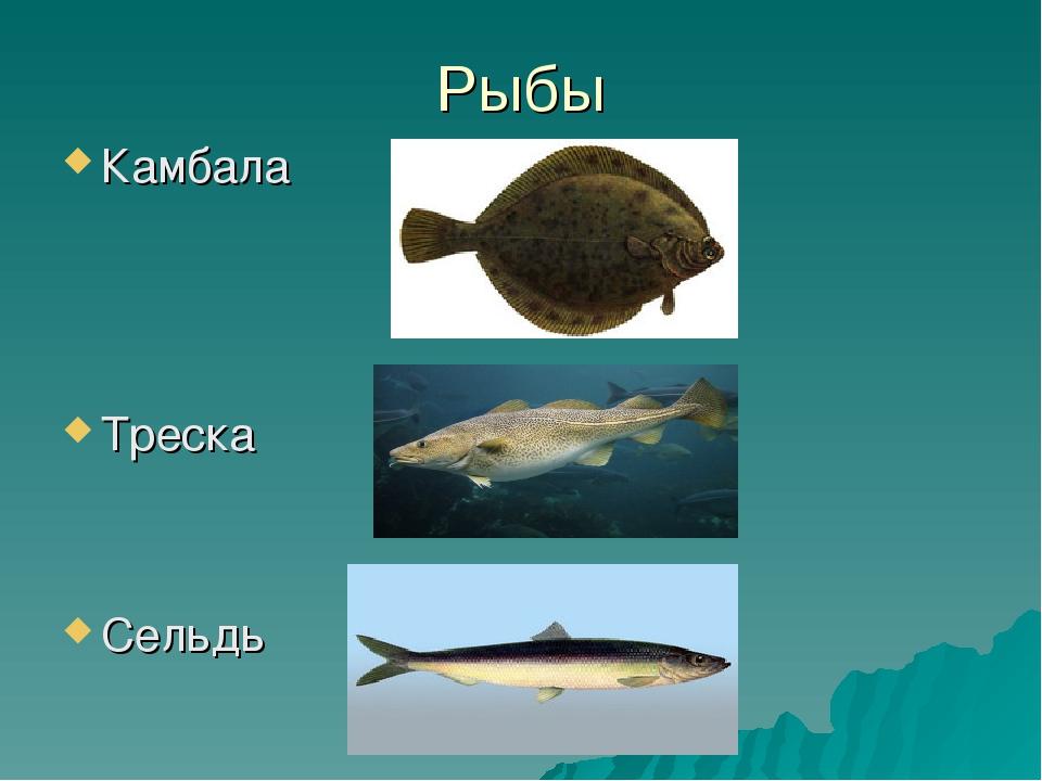 Рыбы Камбала Треска Сельдь