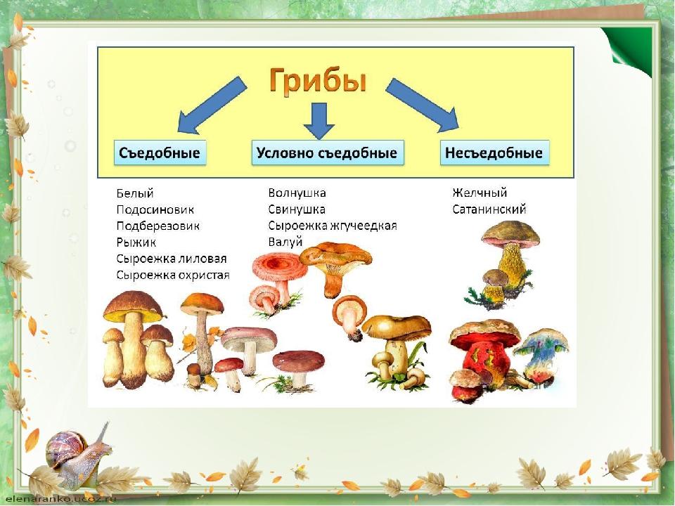представляет классификация грибов по съедобности с фото крестницу
