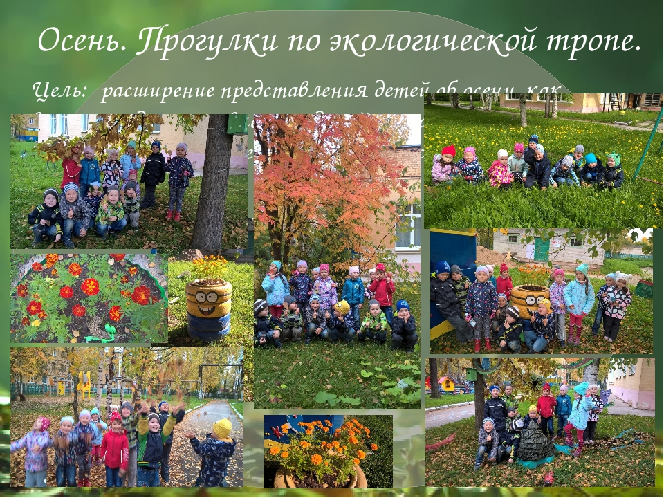 Осень. Прогулки по экологической тропе. Цель: расширение представления детей...