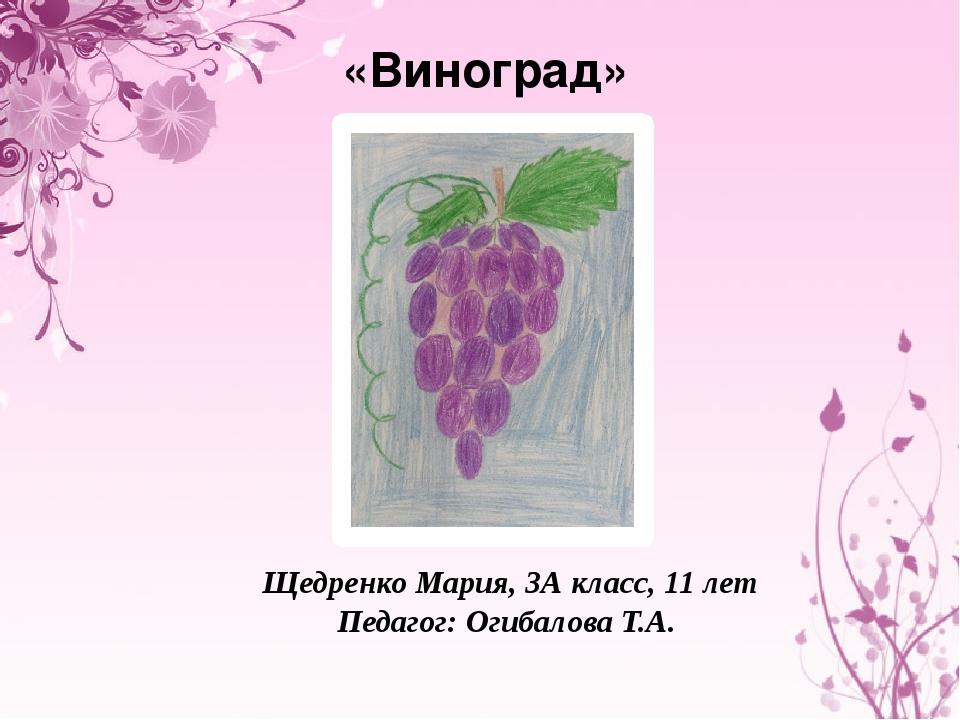 «Виноград» Щедренко Мария, 3А класс, 11 лет Педагог: Огибалова Т.А.