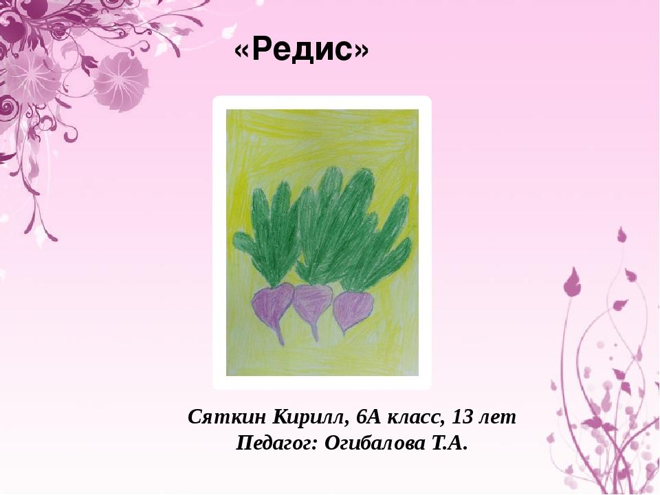 «Редис» Сяткин Кирилл, 6А класс, 13 лет Педагог: Огибалова Т.А.