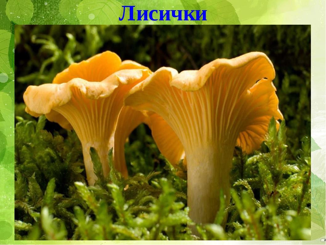 о грибах картинки про грибы сравнении