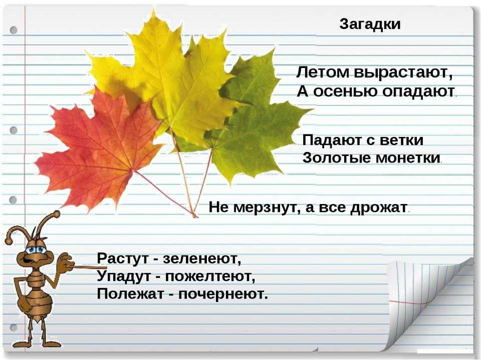 загадки про осень ответы в картинках торгует только