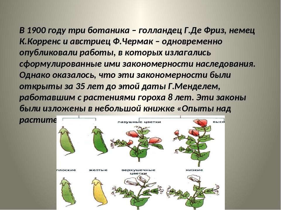 В 1900 году три ботаника – голландец Г.Де Фриз, немец К.Корренс и австриец Ф...