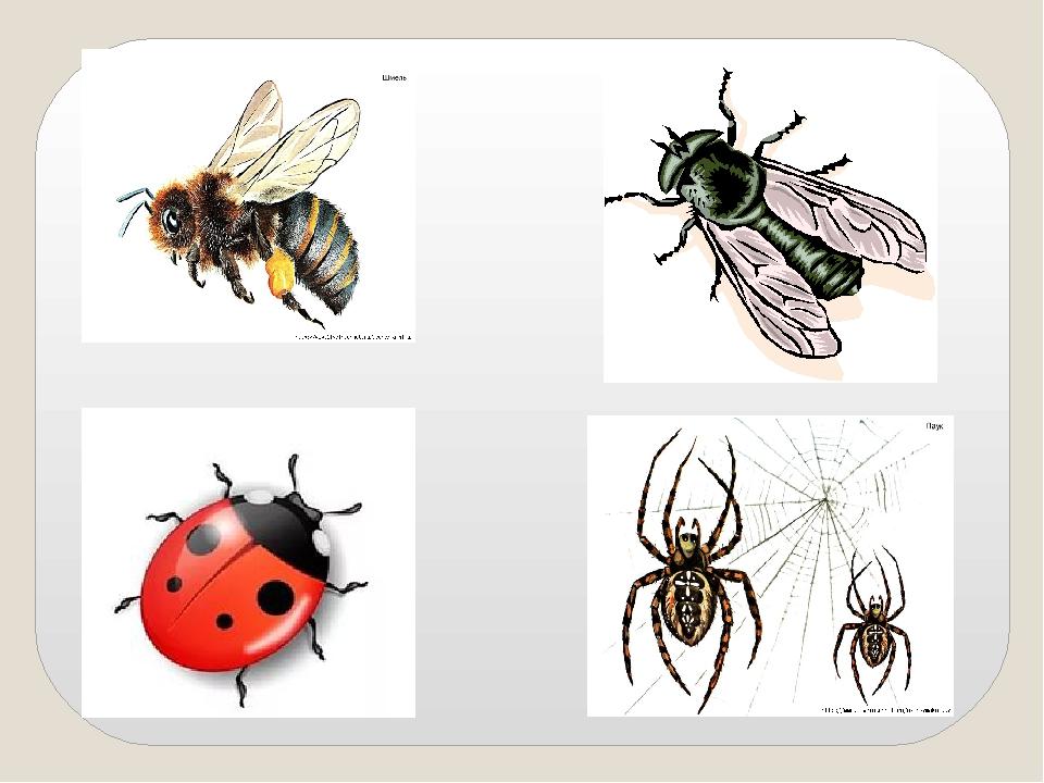 что картинка четвертый лишний насекомые встретить
