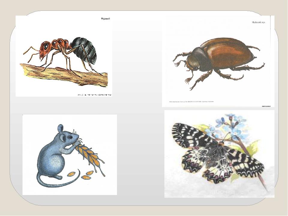 картинка четвертый лишний насекомые ессентуках