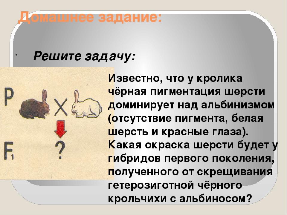 Домашнее задание: Решите задачу: Известно, что у кролика чёрная пигментация...