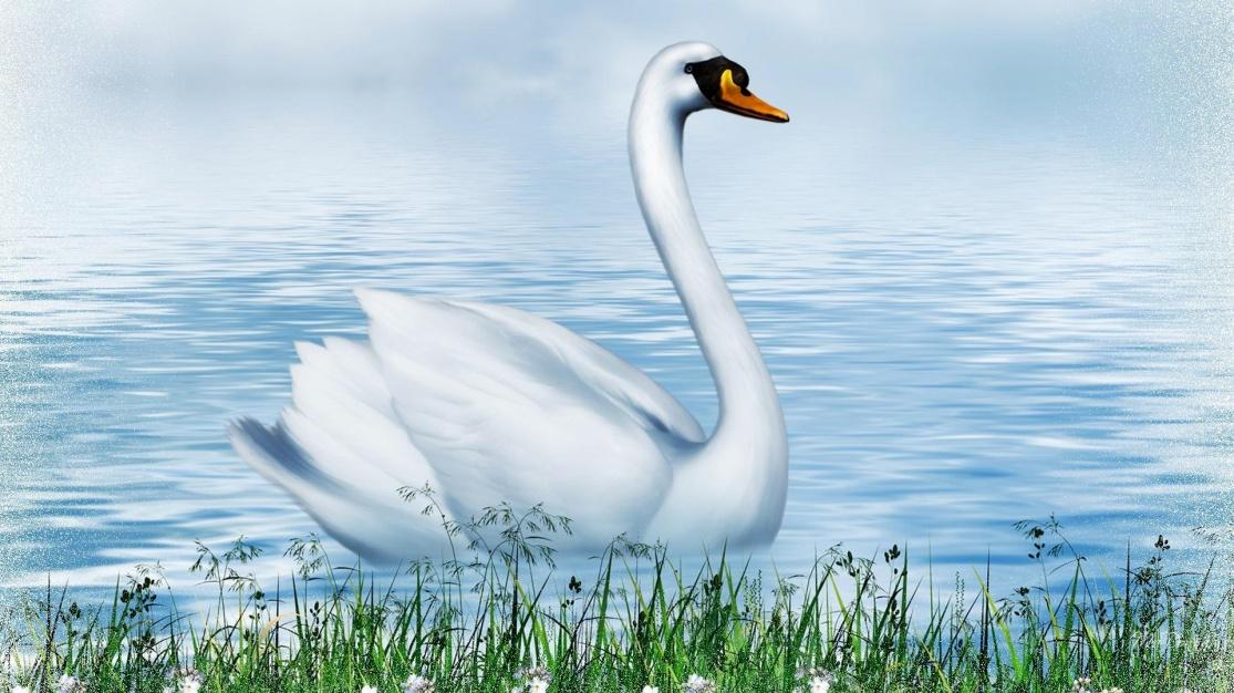 Картинки для детей рисованные лебедь