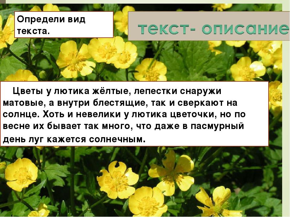 Определи вид текста. Цветы у лютика жёлтые, лепестки снаружи матовые, а внутр...