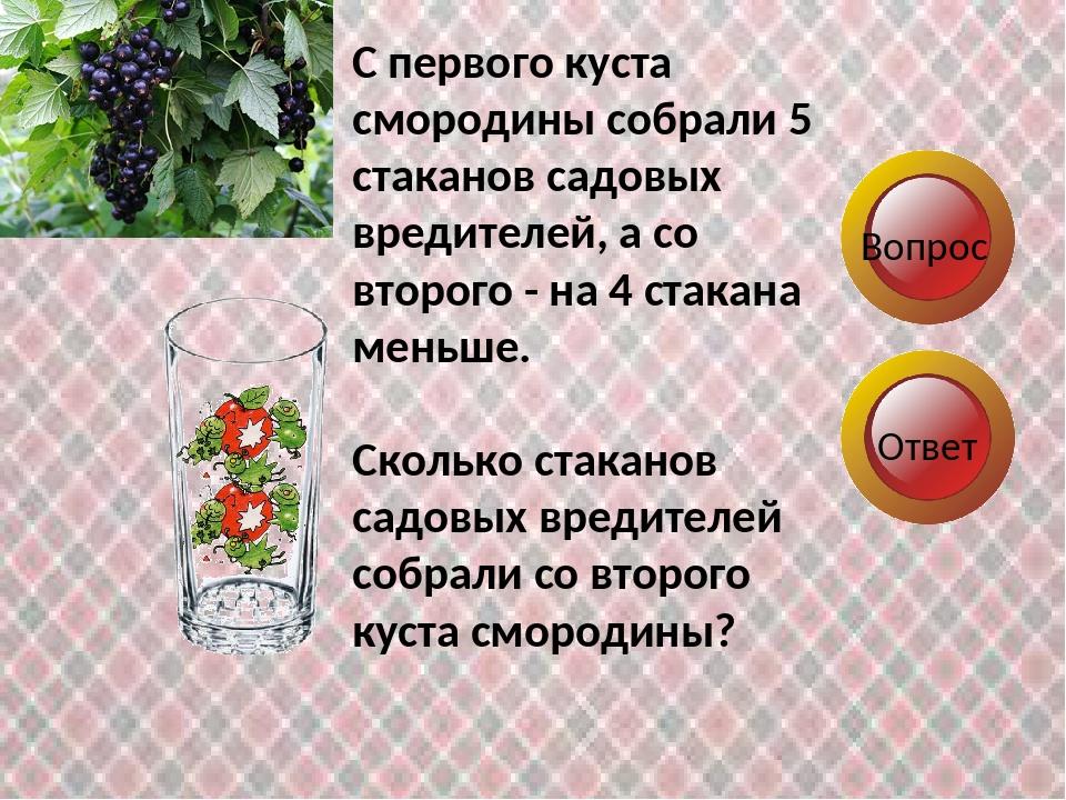 Вопрос Ответ С первого куста смородины собрали 5 стаканов садовых вредителей,...