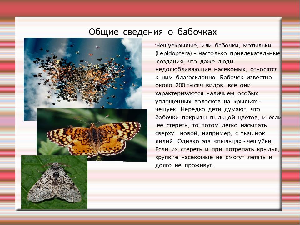 Общие сведения о бабочках Чешуекрылые, или бабочки, мотыльки (Lepidoptera) –...