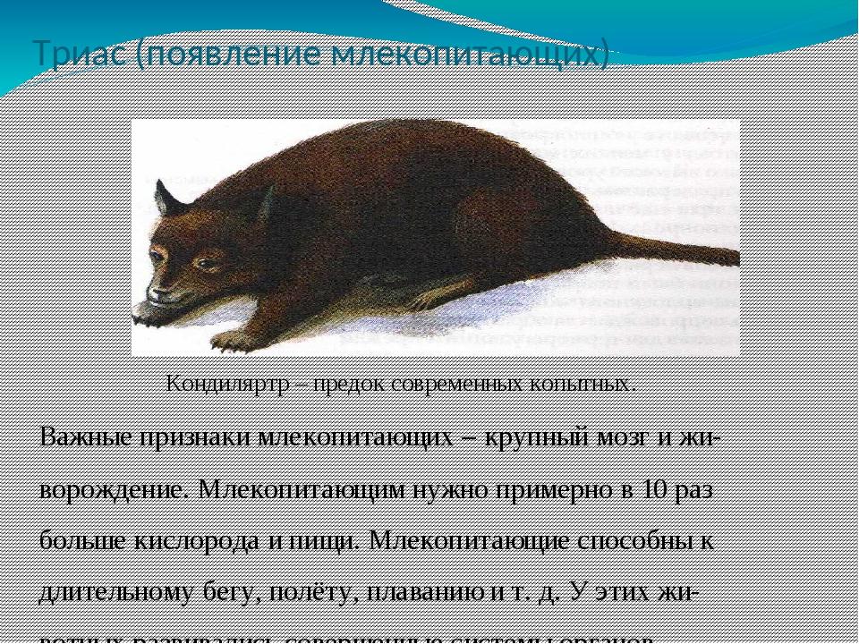 Триас (появление млекопитающих) Кондиляртр – предок современных копытных. Важ...