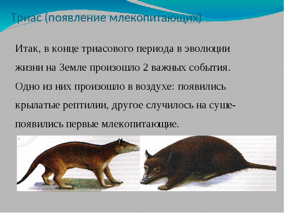 Триас (появление млекопитающих) Итак, в конце триасового периода в эволюции ж...