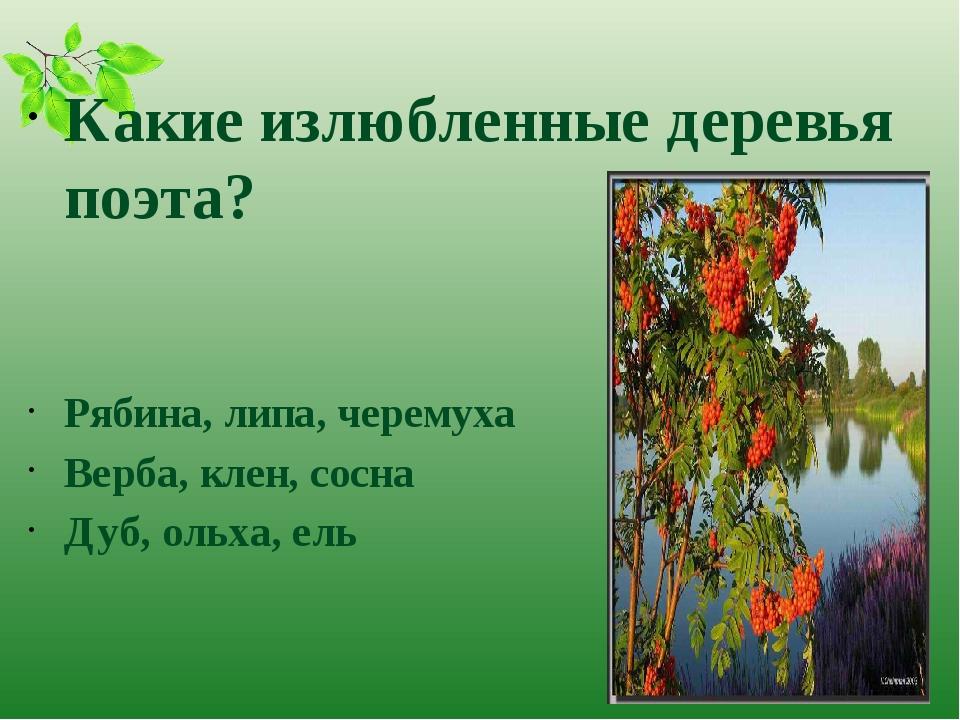 Какие излюбленные деревья поэта? Рябина, липа, черемуха Верба, клен, сосна Д...