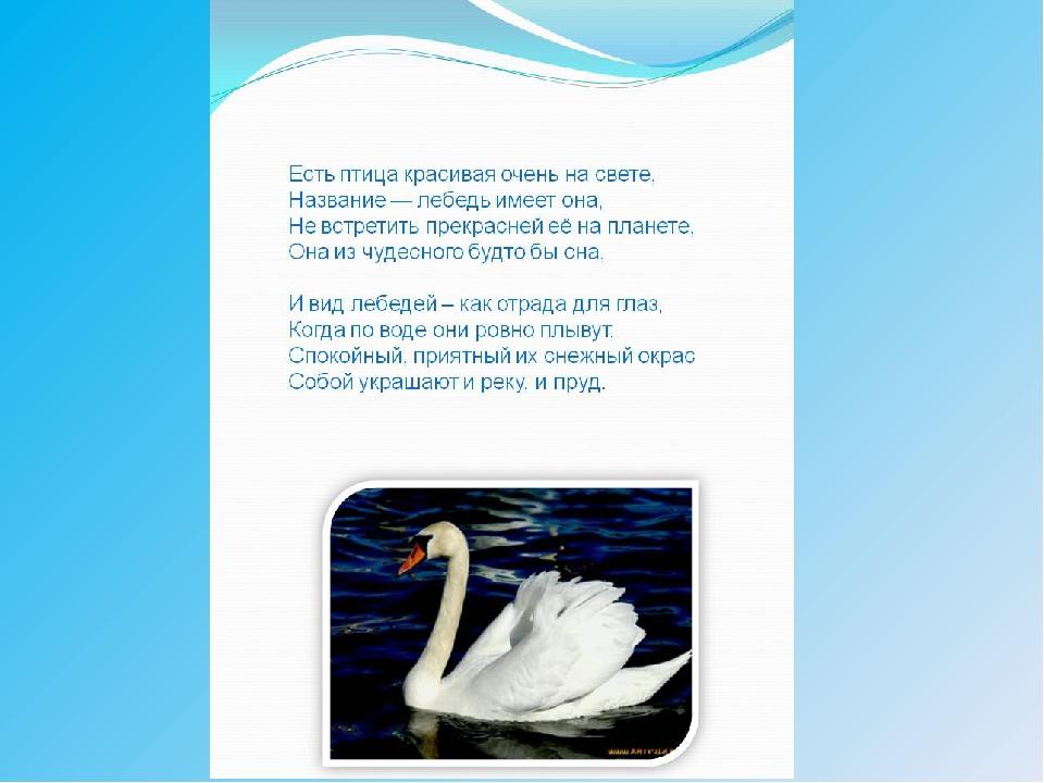 Стихи про лебедей для детей короткие