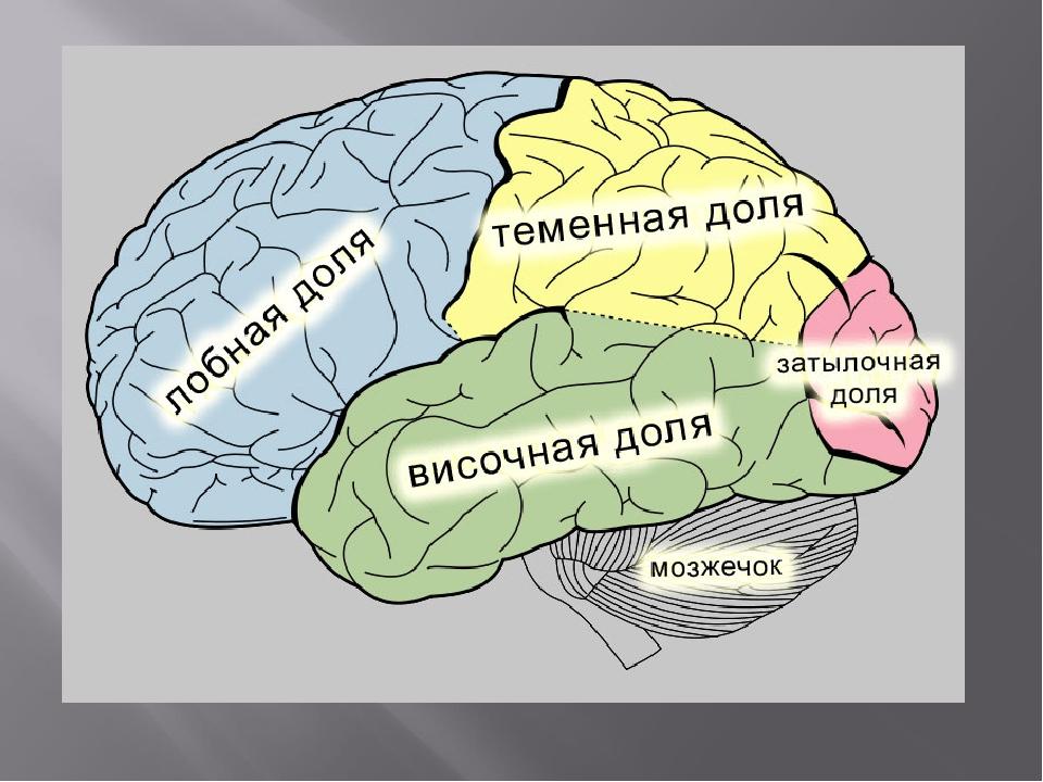 Мозг человека в картинках с надписями, другу гифы мерцающие