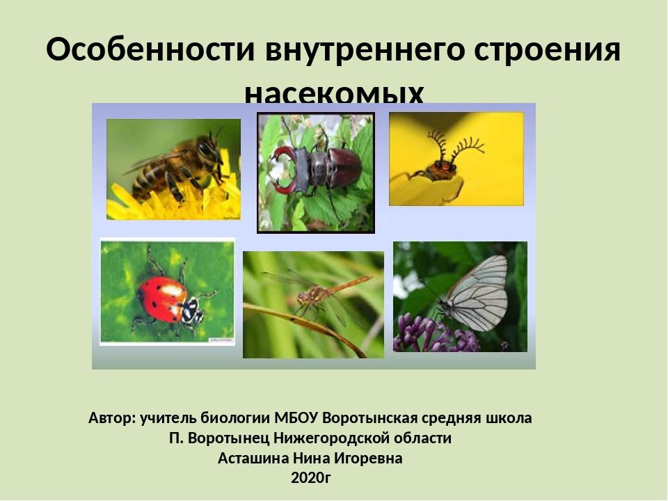 Особенности внутреннего строения насекомых Автор: учитель биологии МБОУ Ворот...