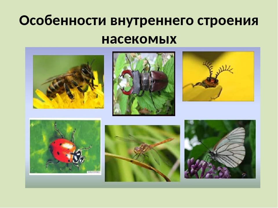 Особенности внутреннего строения насекомых