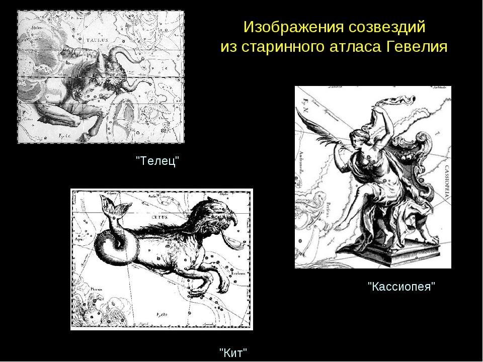 """Изображениясозвездий изстаринногоатласаГевелия """"Телец"""" """"Кит"""" """"Кассиопея"""""""