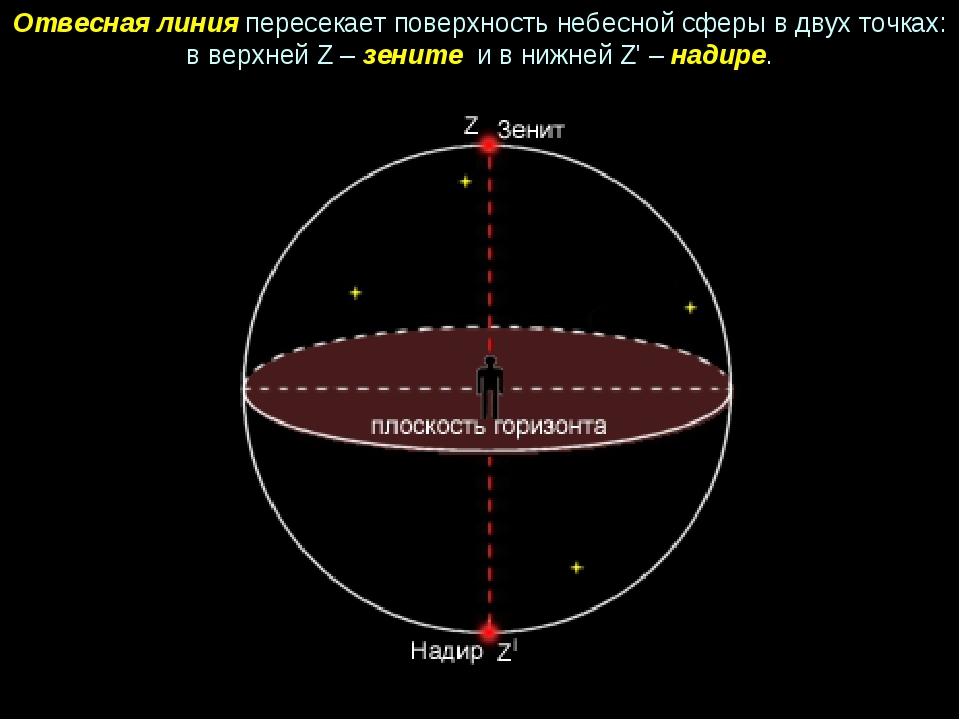 Отвесная линия пересекает поверхность небесной сферы в двух точках: в верхней...
