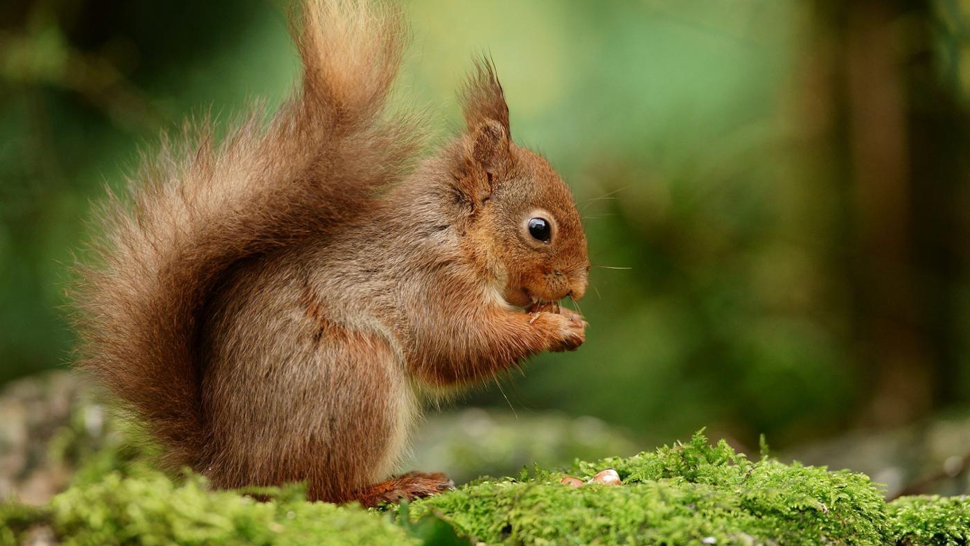 подвязывают, фотографии всех лесных животных друзей