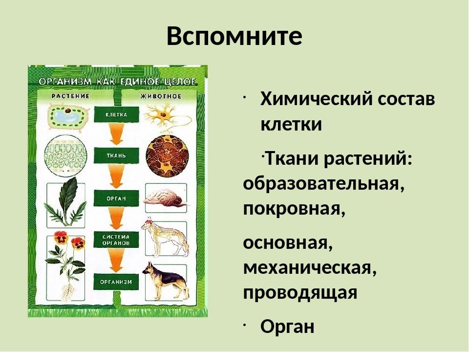 Вспомните Химический состав клетки Ткани растений: образовательная, покровная...