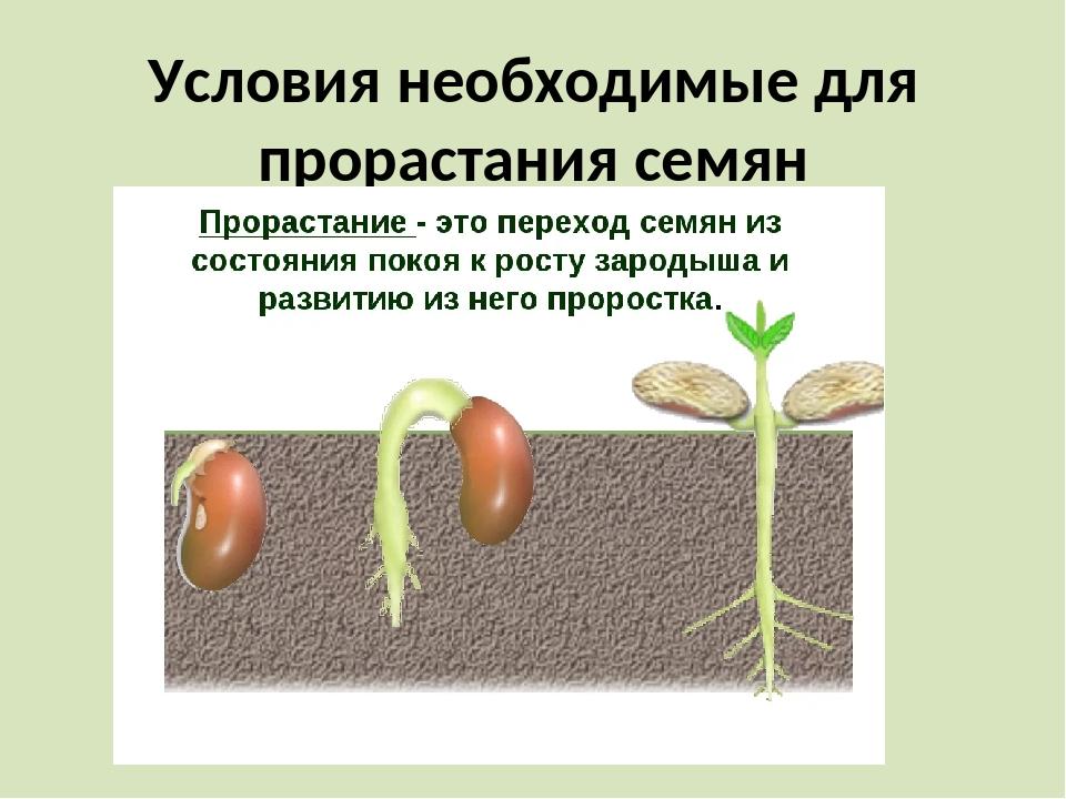Условия необходимые для прорастания семян