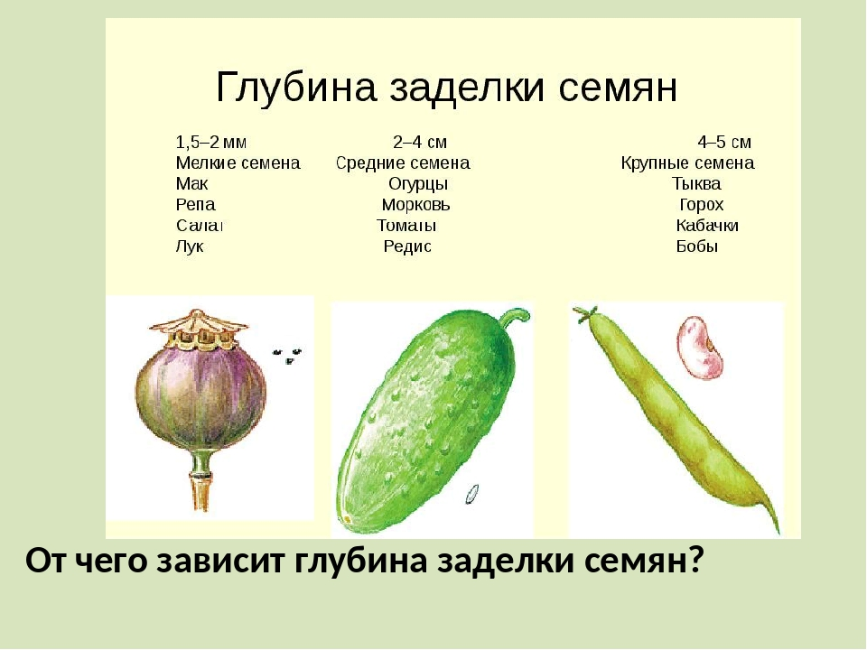 От чего зависит глубина заделки семян?