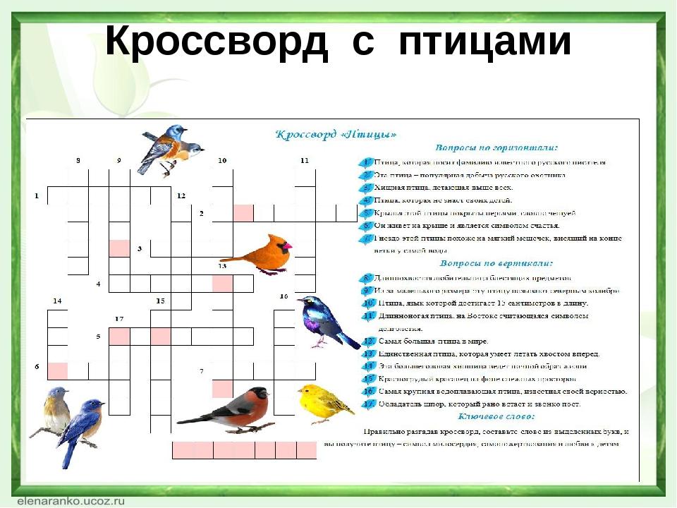 Игры про птиц в картинках с ответами