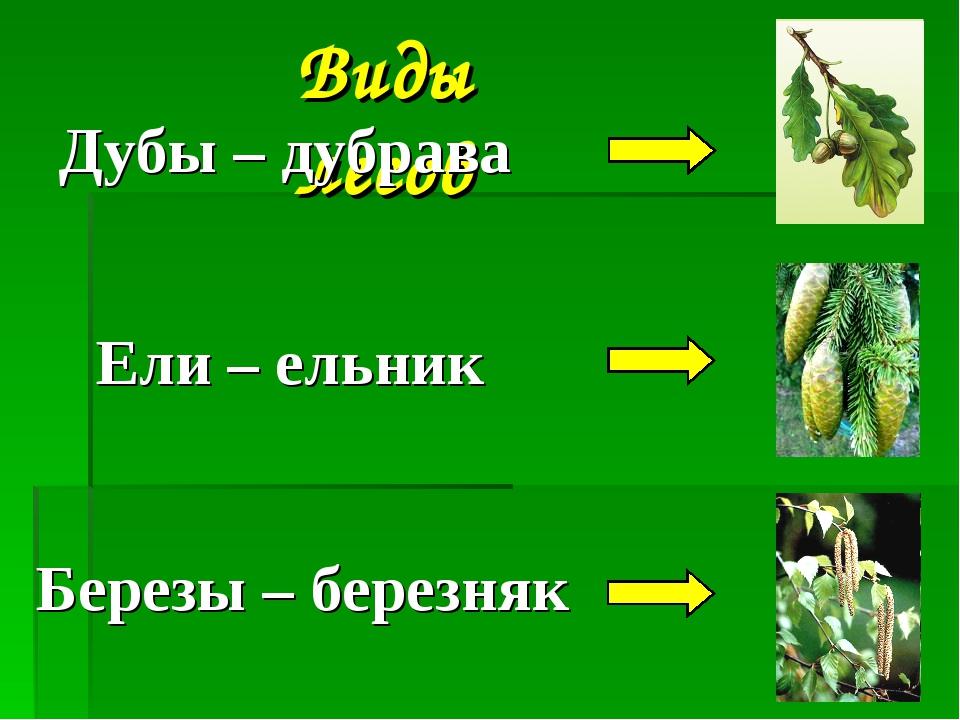 Виды лесов Дубы – дубрава Ели – ельник Березы – березняк