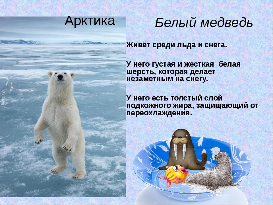 Живёт среди льда и снега. У него густая и жесткая белая шерсть, которая дела...