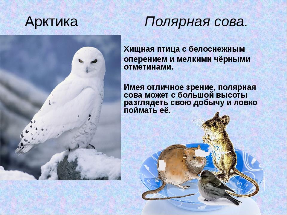 Хищная птица с белоснежным оперением и мелкими чёрными отметинами. Имея отли...