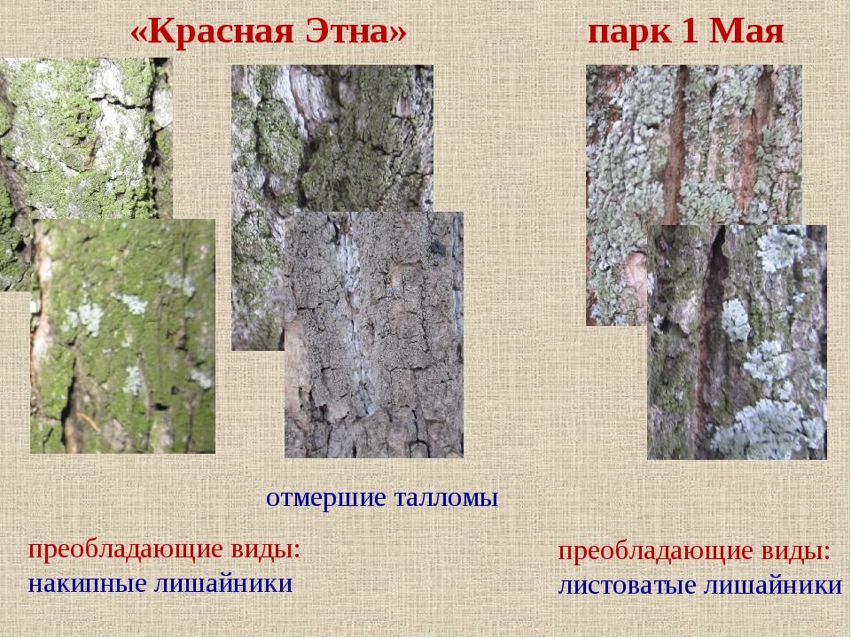 преобладающие виды: накипные лишайники преобладающие виды: листоватые лишайни...