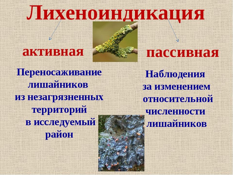 Лихеноиндикация пассивная Переносаживание лишайников из незагрязненных террит...