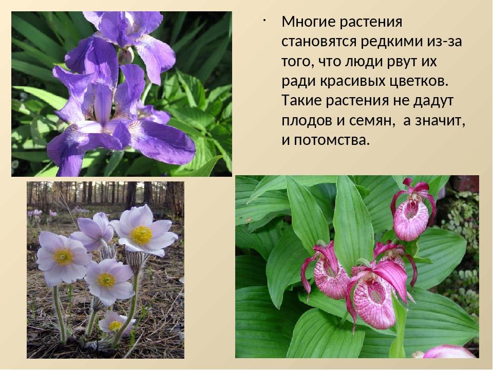 своей редкие растения картинки и описание растения еще возможность
