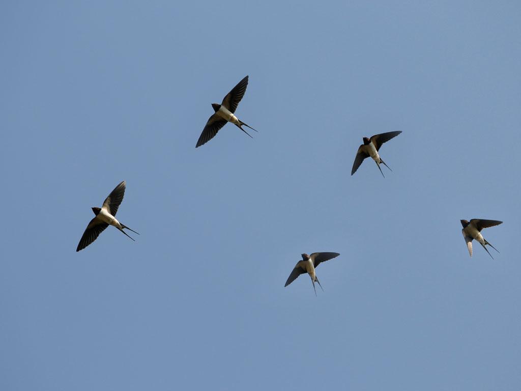 это говорит виды перелетающих птиц фото герметически запаяна, но