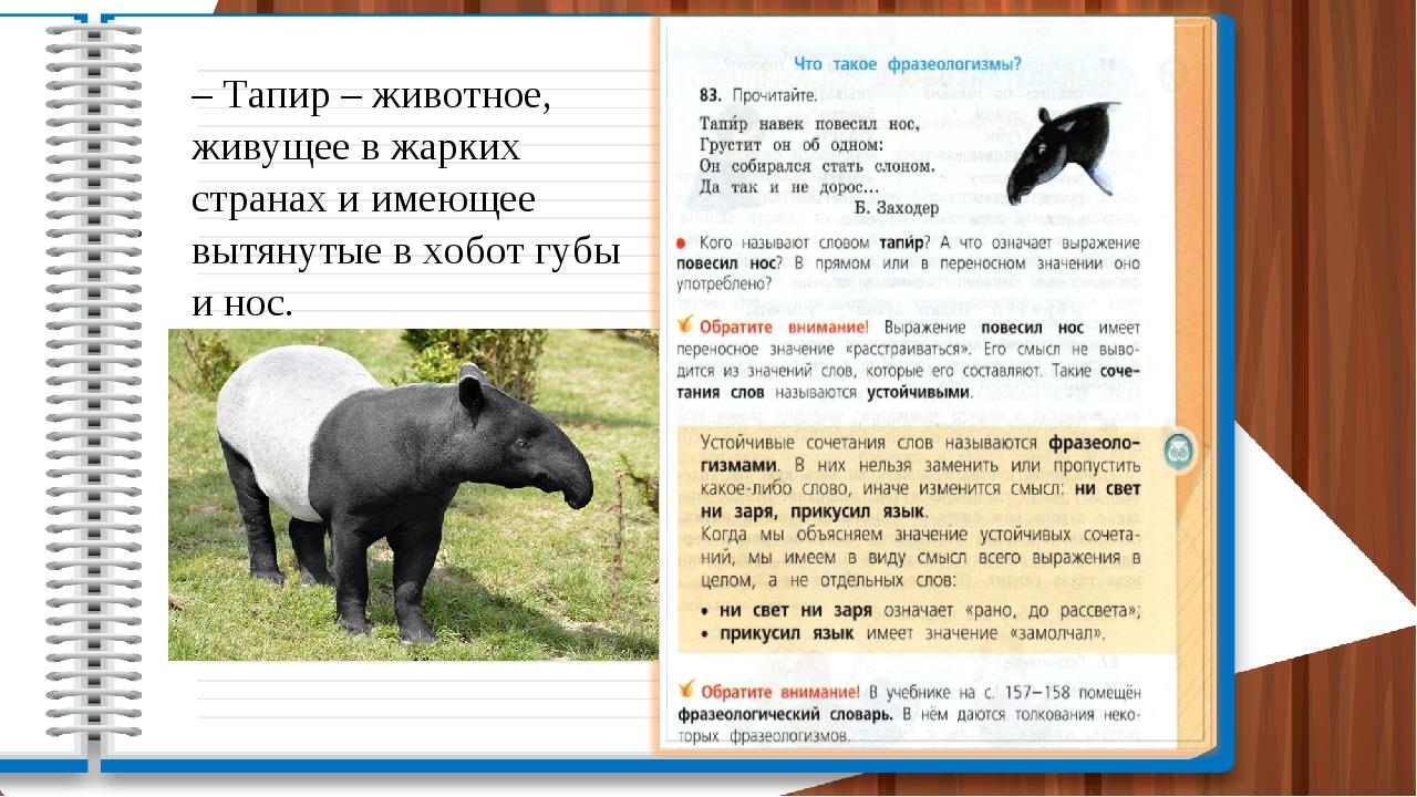 – Тапир – животное, живущее в жарких странах и имеющее вытянутые в хобот губы...
