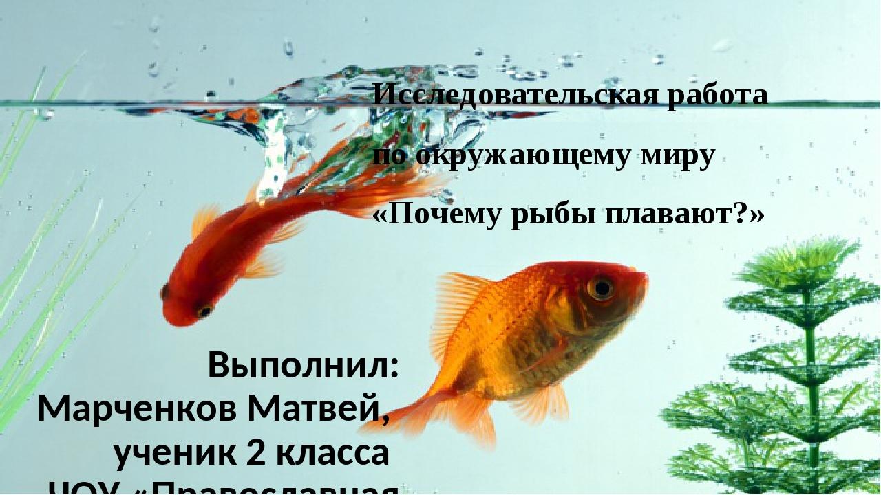 Исследовательская работа по окружающему миру «Почему рыбы плавают?» Выполнил:...