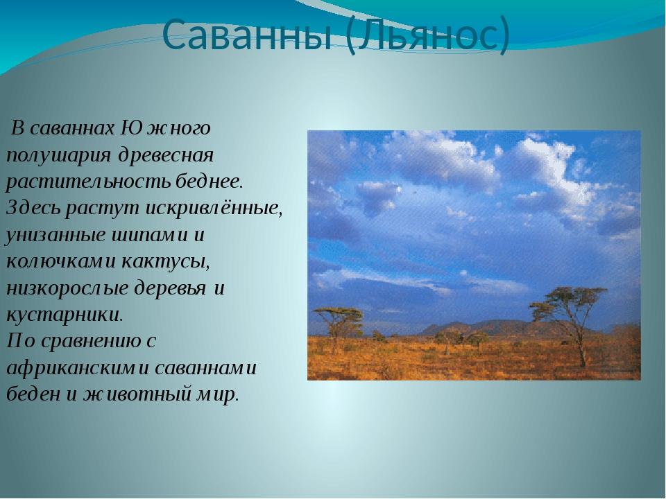 Саванны (Льянос) В саваннах Южного полушария древесная растительность беднее....