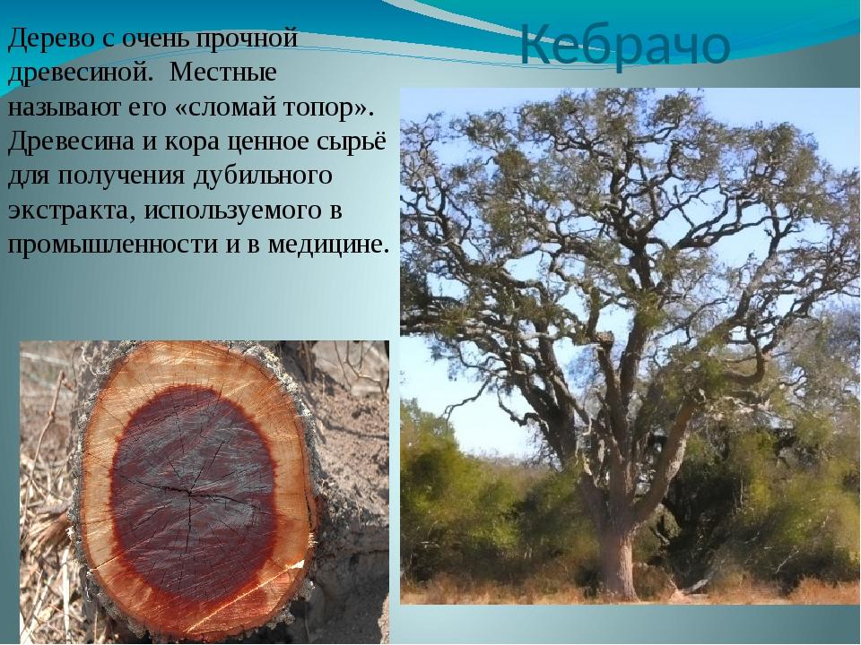 Кебрачо Дерево с очень прочной древесиной. Местные называют его «сломай топор...