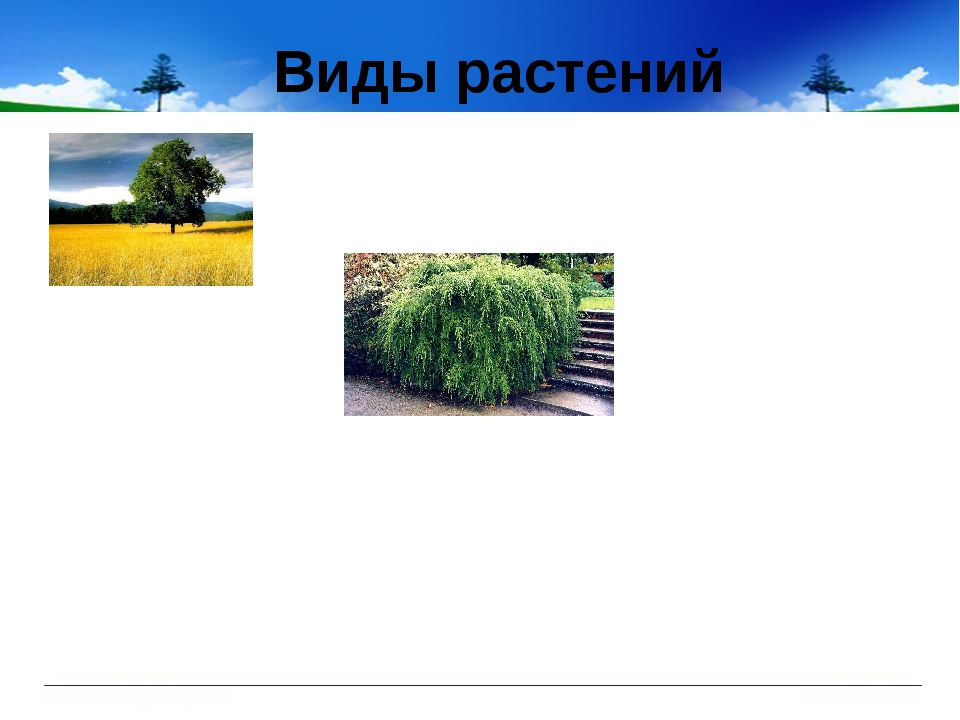 Виды растений
