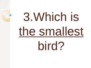 3.Which is the smallest bird?