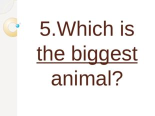 5.Which is the biggest animal?