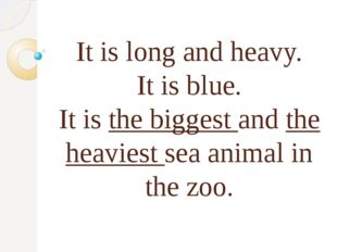 It is long and heavy. It is blue. It is the biggest and the heaviest sea ani