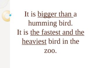 It is bigger than a humming bird. It is the fastest and the heaviest bird in