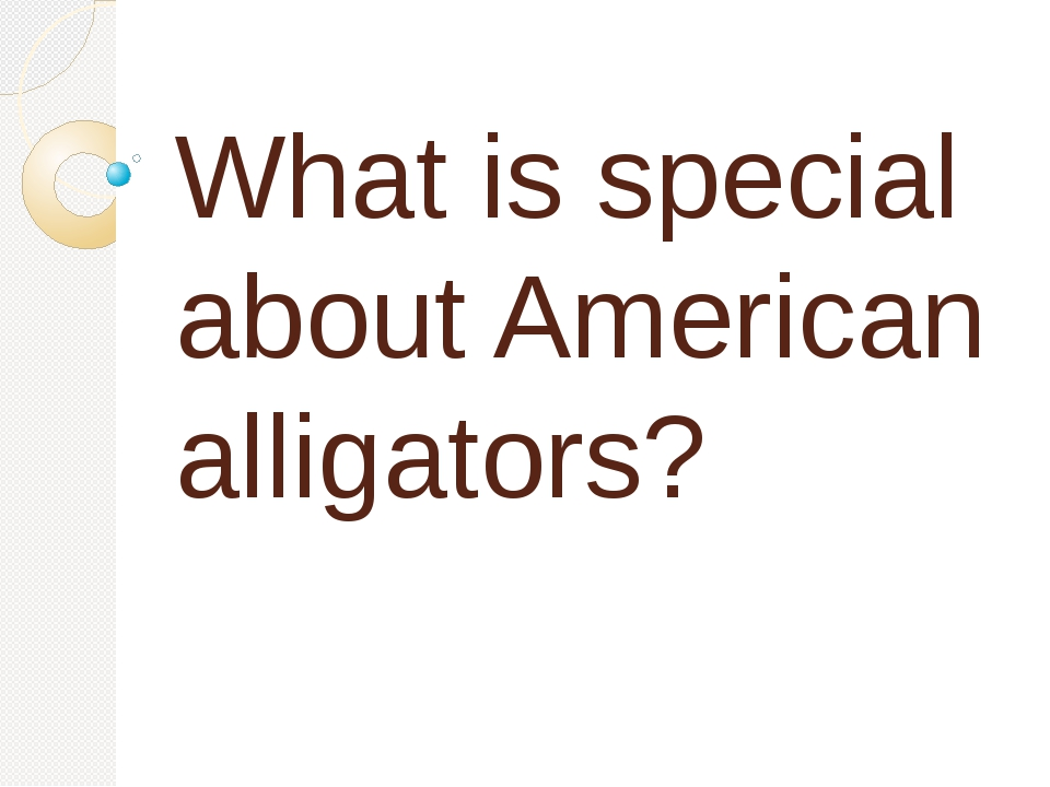 What is special about American alligators?